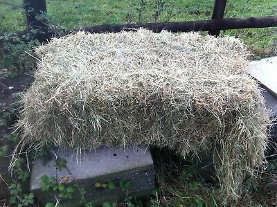 £70 • Buy 20 X Small Hay Bales Rye Grass Mix - Free Delivery Droitwich, Bromsgrove Area