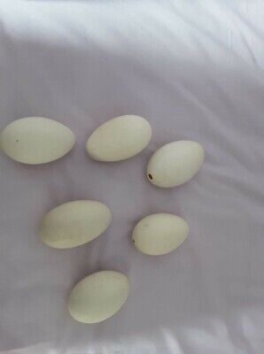 £10 • Buy Goose Eggs ( Blown ) Ready For Decorating.