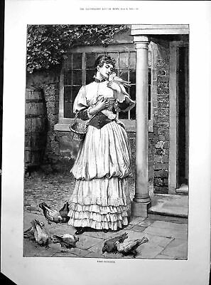 £29.14 • Buy Antique Print First Favourite Lady Hing Pigeon Basket Food Others Feet 1893