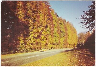 £1.15 • Buy Postcard The Beech Hedge, Meikleour, Blairgowrie Road, Perthshire, Scotland