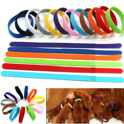£4.63 • Buy Puppy Collars Welping ID Bands Newborn Dog Kitten Pet Tags 12 Colors Adjustable~