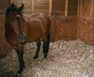 £17.82 • Buy Horse Bedding - 100% Recycled, Shredded Cardboard - 1 X 10 KG BALES Free P&P