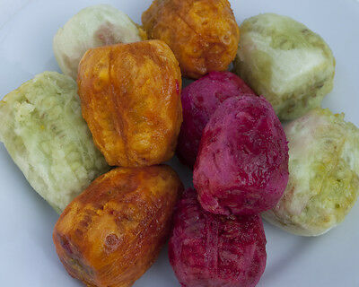 120+ FRESH MIX Prickly Pear / Opuntia Ficus Indica Seeds All 3 Varieties • 3.99£