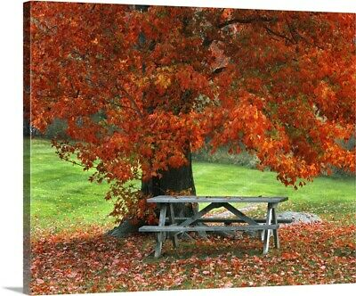 £203.97 • Buy New York, West Park. Bench Under Maple Canvas Wall Art Print, Tree Home Decor