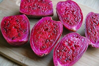 20 Seeds Purple Frt Prickly Pear Cactus, Opuntia Ficus Indica Nopal Tuna Morada • 15.47£