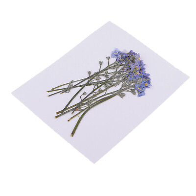 10x Pressed Forget-me-not Dried Flowers For Arts Crafts Resin Jewelry Making • 2.86£
