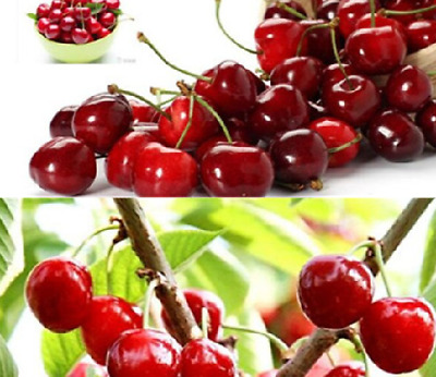 20 Pcs Cherry Indoor Tree Seeds - UK Seller • 1.94£
