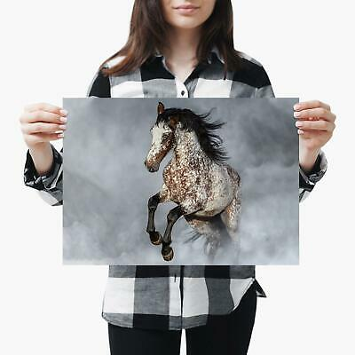 A3| Appaloosa Horse Pony Equine Riding Size A3 Poster Print Photo Art Gift #2067 • 8.99£