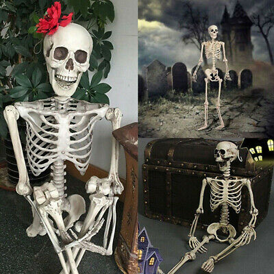 $6.20 • Buy Halloween Poseable Life Size Skeleton Party Prop Decor Human Anatomy Model
