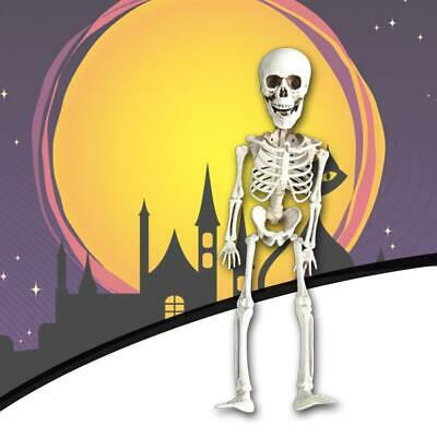 $3.95 • Buy Halloween Poseable Skeleton Skull Party Prop Decor Human Anatomy Model Toys