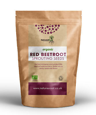 £9.99 • Buy Organic Red Beet Sprouting Seeds - Beetroot Superfood Non GMO Microgreen Sprouts