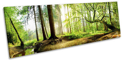 Forest Woodland Sunset Print PANORAMA CANVAS WALL ART Picture Green • 34.99£