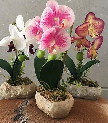 AU29.99 • Buy Real Touch Artificial Butterfly Orchid Phalaenopsis Fake Florers Ceramic Pot