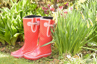 £18 • Buy Budget Spotty Red Glossy Wellies UK Size 4/5 ONLY