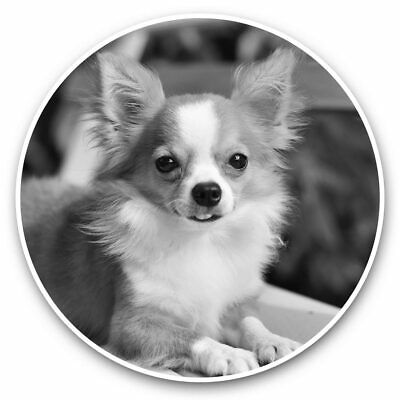 £3.99 • Buy 2 X Vinyl Stickers 10cm (bw) - Cute Little Chihuahua Puppy Dog  #42679