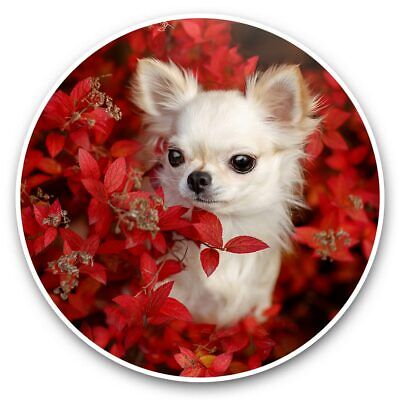 2 X Vinyl Stickers 15cm  - White Chihuahua Puppy Dog Red Flowers  #46421 • 3.49£