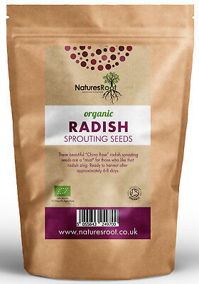 £5.99 • Buy Organic Radish Sprouting Seeds China Rose Superfood Vegetable Microgreen Sprouts