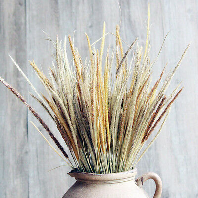 AU5.69 • Buy 50X Natural Dried Flowers Goldenrod Reed Bunch Wedding Home Floral Decor DIY