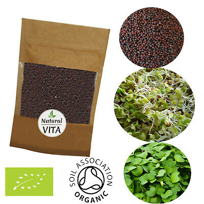 £6.99 • Buy Organic Broccoli Sprouting Seeds For Sprouts, Microgreens | SUPERFOOD