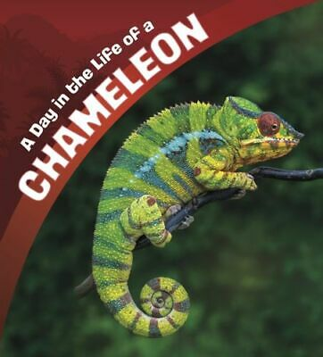 Day In The Life Of A Chameleon BNEW Amstutz Lisa J. • 12.20£