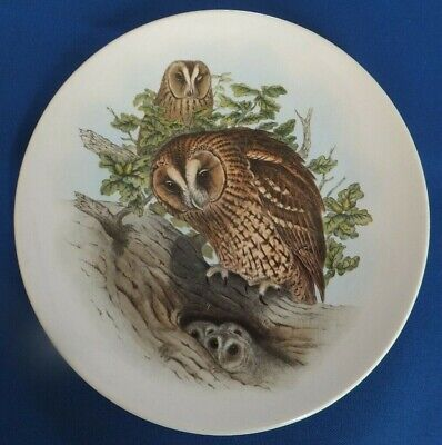 TAWNY OWL Poole 5  Decorative Plate Original By John Gould • 5£