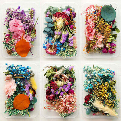 AU9.38 • Buy Real DIY Dried Flowers Plants Pressed For Resin Jewellery Making_Craft