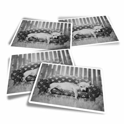 £3.49 • Buy 4x Rectangle Stickers - BW - Cute Chihuahua Puppy Dog  #40823