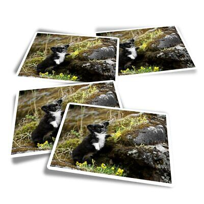 £3.49 • Buy 4x Rectangle Stickers - Chihuahua Puppy Black & White Dog  #44582