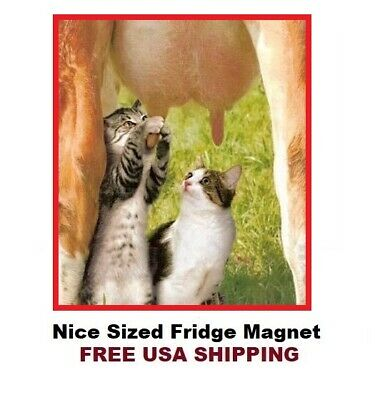$3.95 • Buy 649 - Funny Cats Drinking Milk From Cow Fridge Refrigerator Magnet