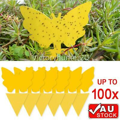 AU11.85 • Buy 20/30/50/100 Dual Sided Sticky Trap Insect Killer Whitefly Thrip Fruit Fly Gnat