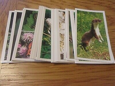 Grandee - Britain's Wayside Wildlife  - Full Set  30  Cigarette  / Cigar Cards • 2.49£