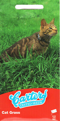 £3.29 • Buy Cat Grass 200 Seeds/Healthy Treats All Year Round/Supplement/Ready In 7 Days/ UK