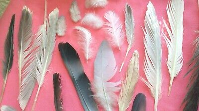 $9.49 • Buy FREE FALLEN Real Feathers X 23 Medium SEAGULL, PIGEON,  MAGPIE UK FREE P&P