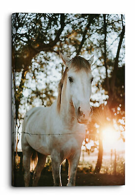 $19.44 • Buy Majestic White Horse Glowing Sun Canvas Wall Art Picture Home Decoration