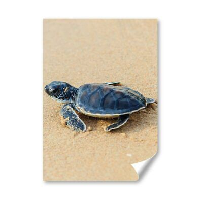 £4.99 • Buy A4 - Small Baby Green Sea Turtle Poster 21X29.7cm280gsm #3329