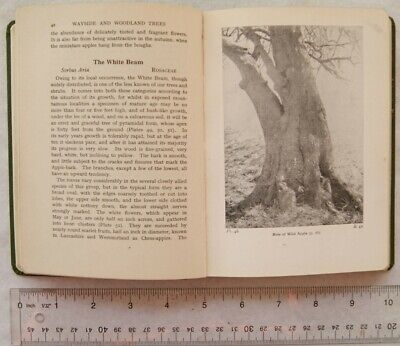 £3.50 • Buy 1945 Wayside & Woodland Trees, A Guide To The British Sylva By Edward Step