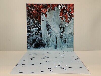 £19.99 • Buy Custom Game Of Thrones Forest Ikea Detolf 12  & 1/6th Scale Diorama Backdrop