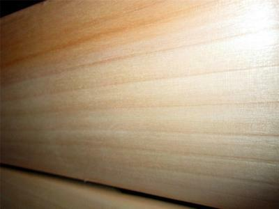 £75 • Buy Pro Quality Type A English Willow Cricket Bat - Nurtured In The UK
