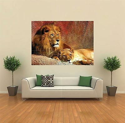 Lion Lioness Animal Giant Wall Art Poster Print • 13.99£