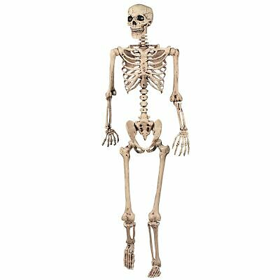 $54.99 • Buy 165cm Halloween Skeleton Poseable Decoration Life Size Party Decoration