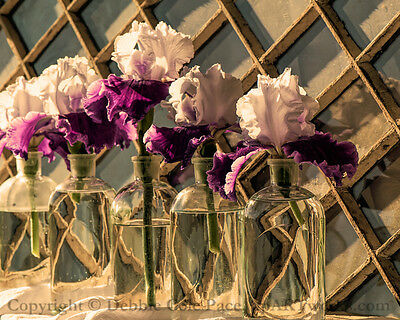 PICTURE 8x10  MATTED TO 11x14  PHOTO PRINT HOME DECOR IRIS ANTIQUE JARS WINDOW • 19.19£