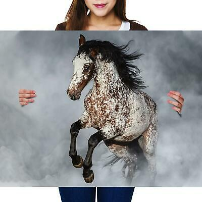 A2 | Appaloosa Horse Pony Equine Ride Size A2 Poster Print Photo Art Gift #2067 • 11.99£