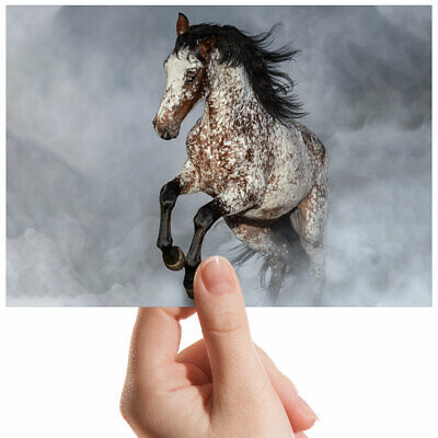 Appaloosa Horse Equestrian Small Photograph 6  X 4  Art Print Photo Gift #2067 • 2.49£