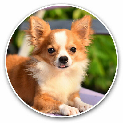 £3.99 • Buy 2 X Vinyl Stickers 7.5cm - Cute Little Chihuahua Puppy Dog Cool Gift #21338