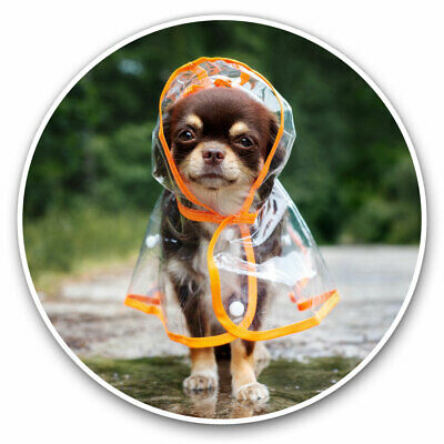 2 X Vinyl Stickers 10cm - Chihuahua Raincoat Puppy Dog Cool Gift #16007 • 2.49£