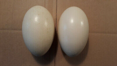 £40 • Buy Blown Rhea Eggs Pair
