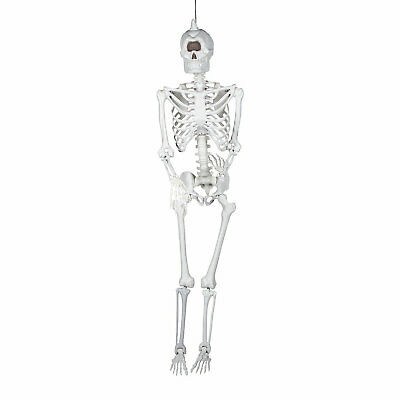 $70.49 • Buy Life-Size Cyclops Skeleton Halloween Decoration - Home Decor - 1 Piece