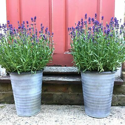 2 X Tall Vintage Style French Grey Large Round Metal Garden Planters Flower Pots • 19.99£