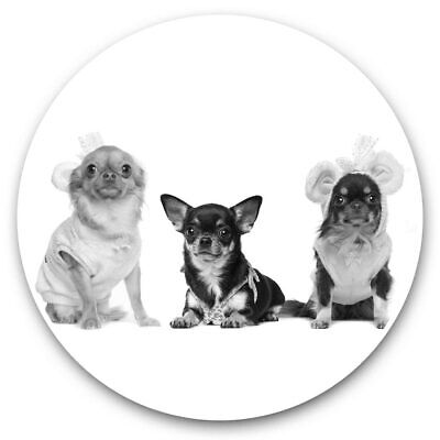 2 X Vinyl Stickers 7.5cm (bw) - Chihuahua Dogs Puppy Pet Animals  #40824 • 2.49£