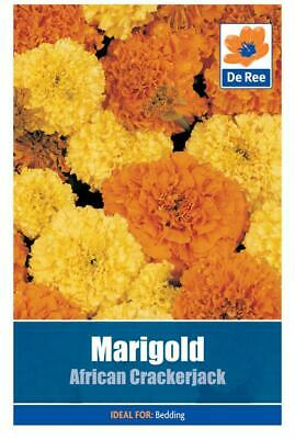 PACKET Of MARIGOLD African Crackerjack 80 FLOWER Garden SEEDS • 0.99£